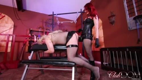 Worship, Mistress, Femdom Porn Video 6446
