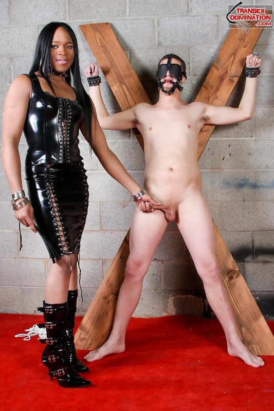 TranSexDomination SiteRip