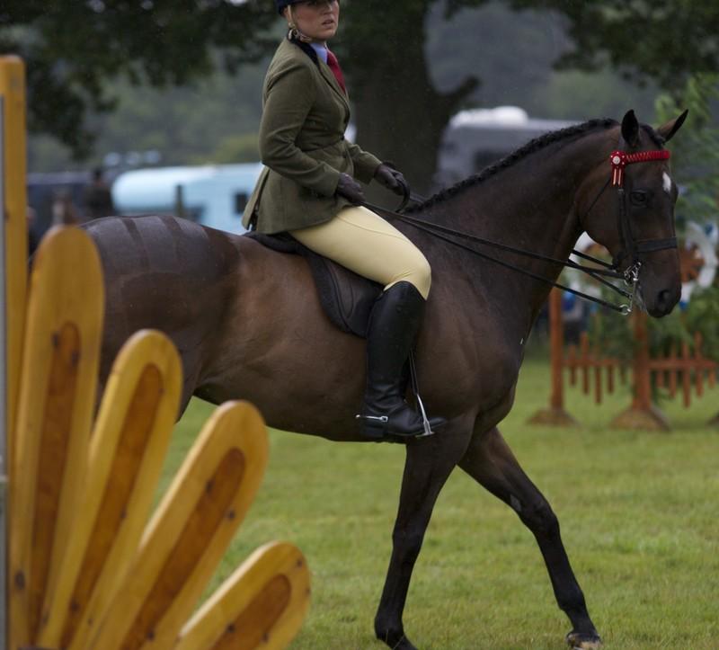 beautiful equestrian lady in sexy jodhpurs & boots